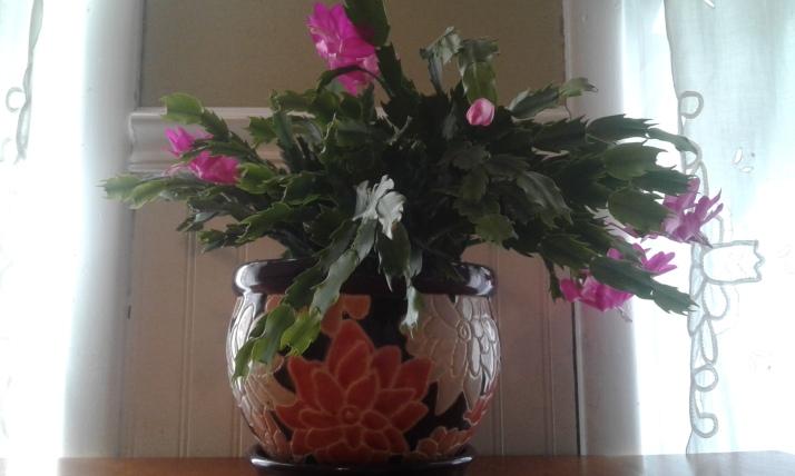 cactus-daylight